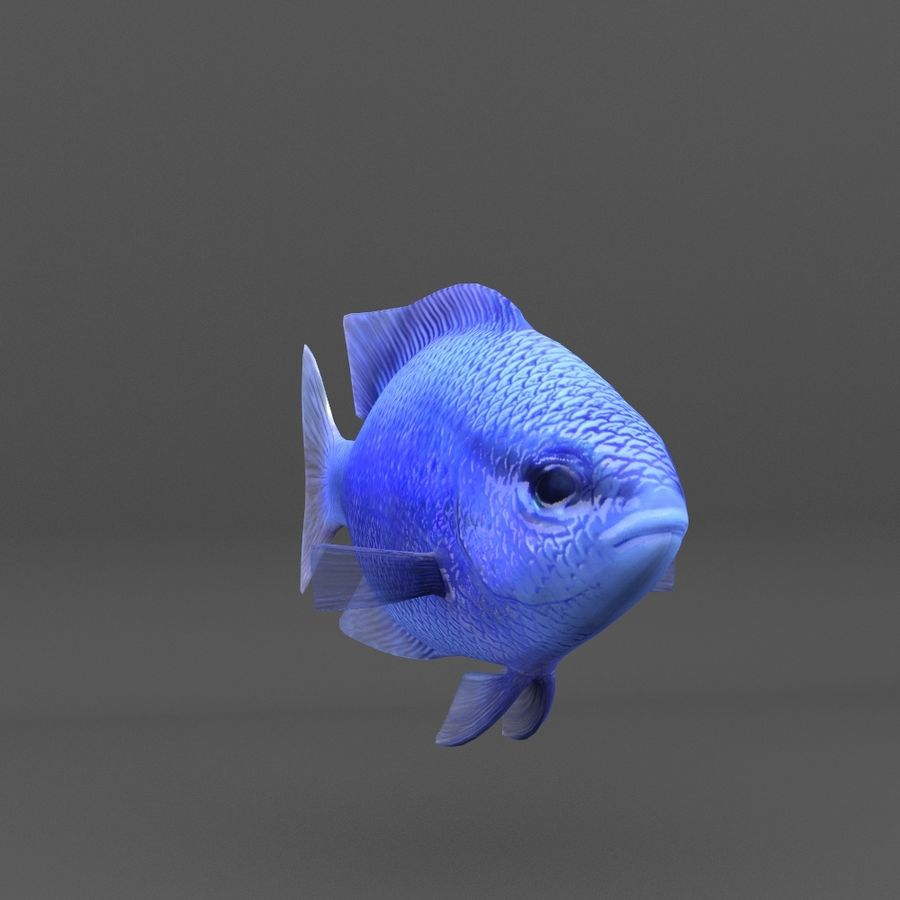 coral reef and fishes royalty-free 3d model - Preview no. 89