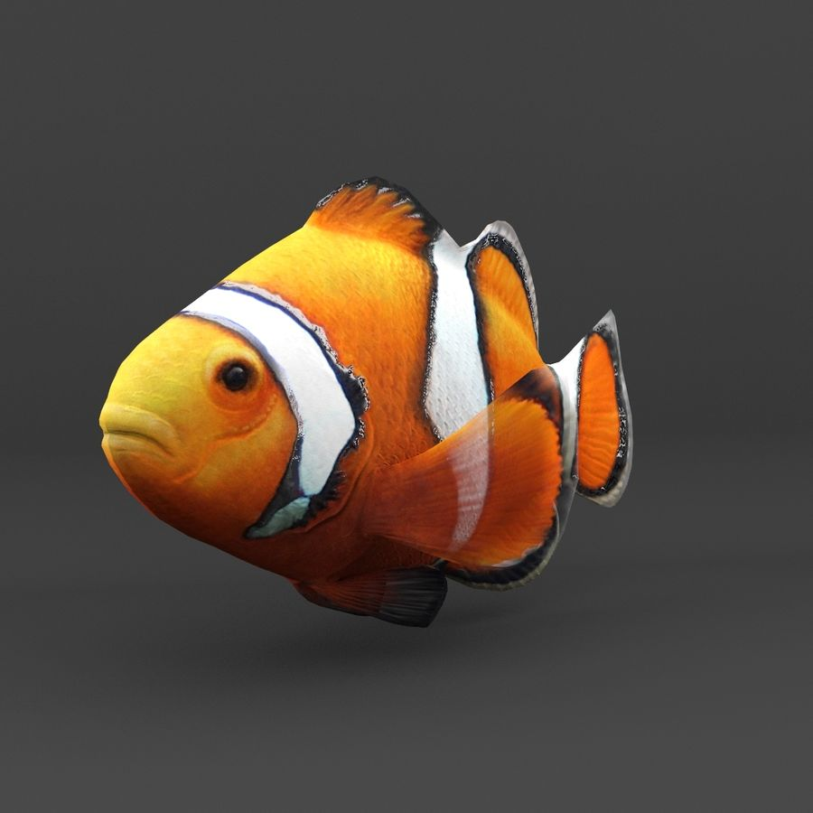 coral reef and fishes royalty-free 3d model - Preview no. 44