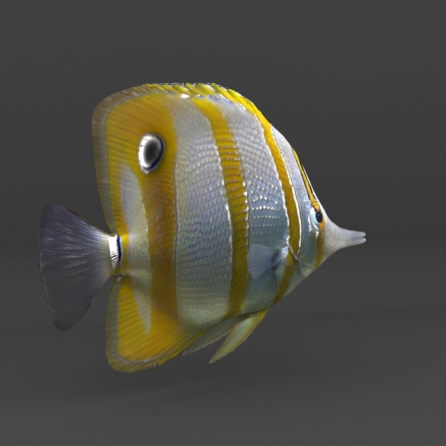 coral reef and fishes royalty-free 3d model - Preview no. 42