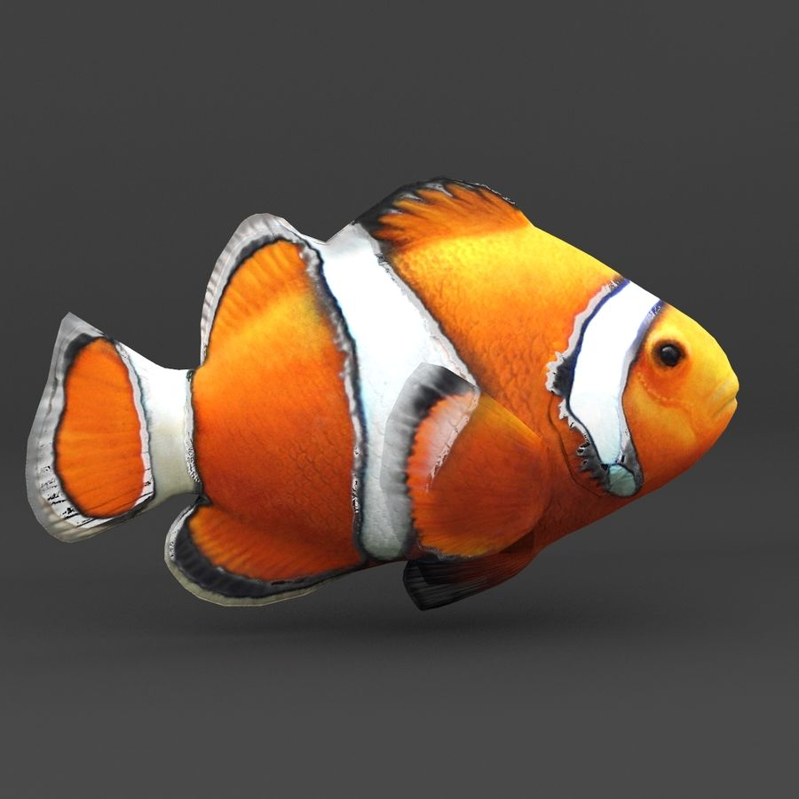 coral reef and fishes royalty-free 3d model - Preview no. 25