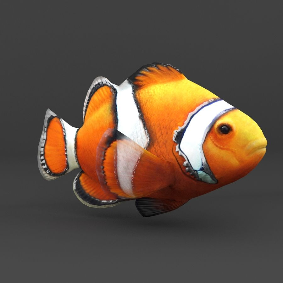 coral reef and fishes royalty-free 3d model - Preview no. 23