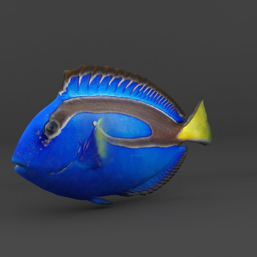 coral reef and fishes royalty-free 3d model - Preview no. 21