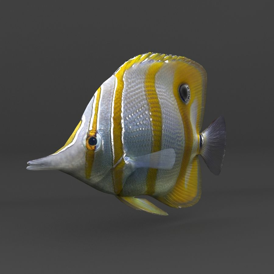 coral reef and fishes royalty-free 3d model - Preview no. 57