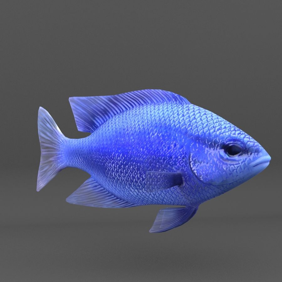 coral reef and fishes royalty-free 3d model - Preview no. 61
