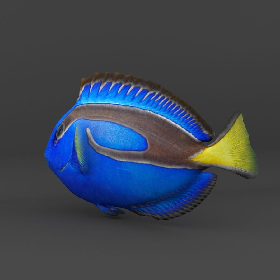 coral reef and fishes royalty-free 3d model - Preview no. 16