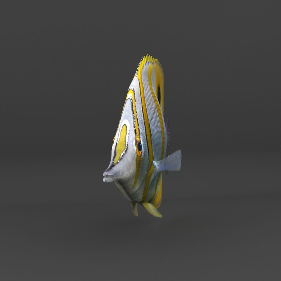 coral reef and fishes royalty-free 3d model - Preview no. 62