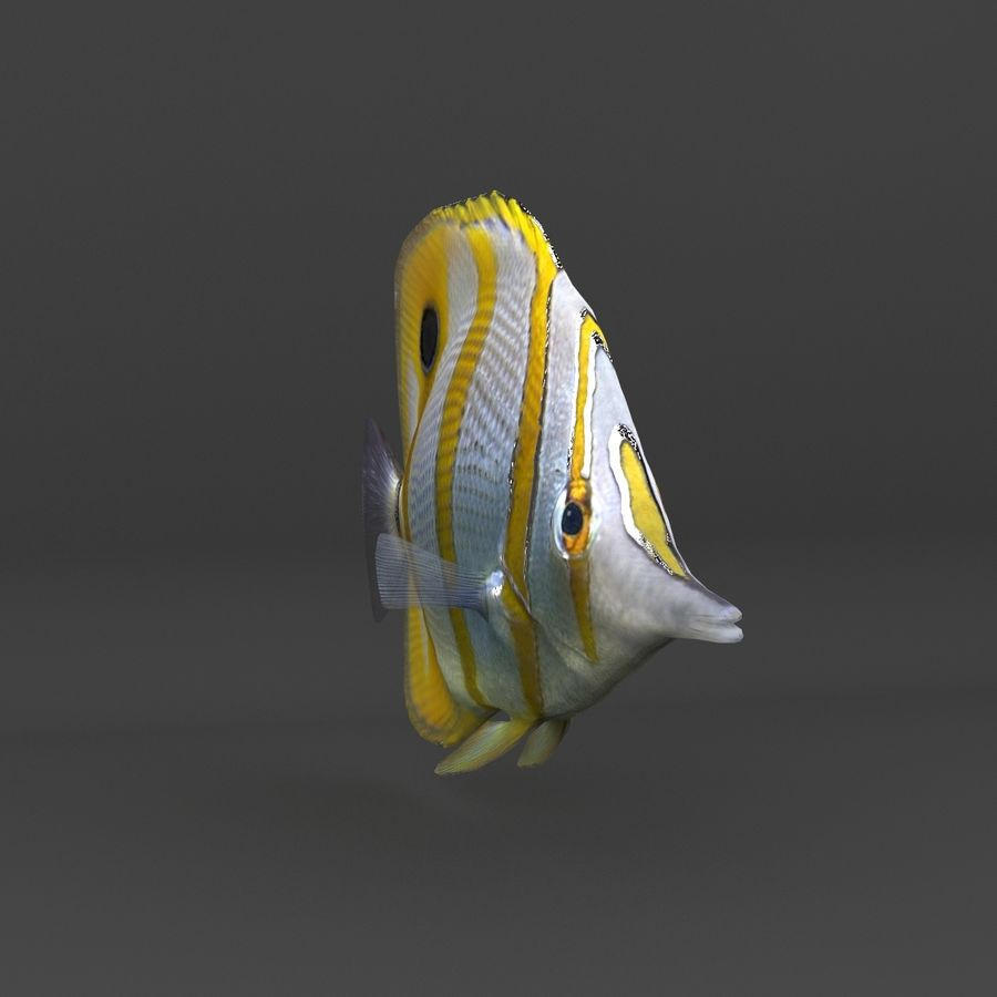 coral reef and fishes royalty-free 3d model - Preview no. 68