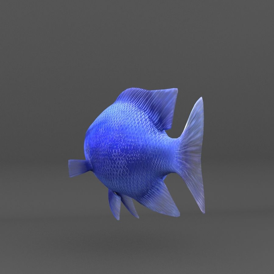 coral reef and fishes royalty-free 3d model - Preview no. 76