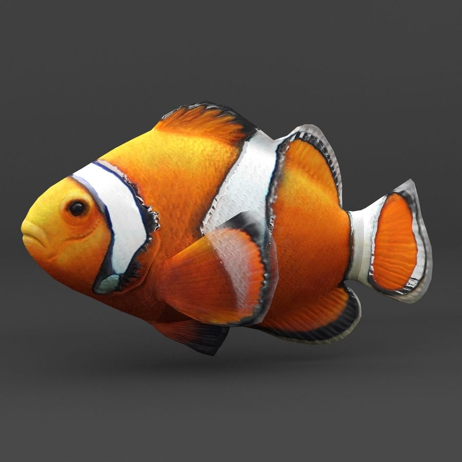 coral reef and fishes royalty-free 3d model - Preview no. 41