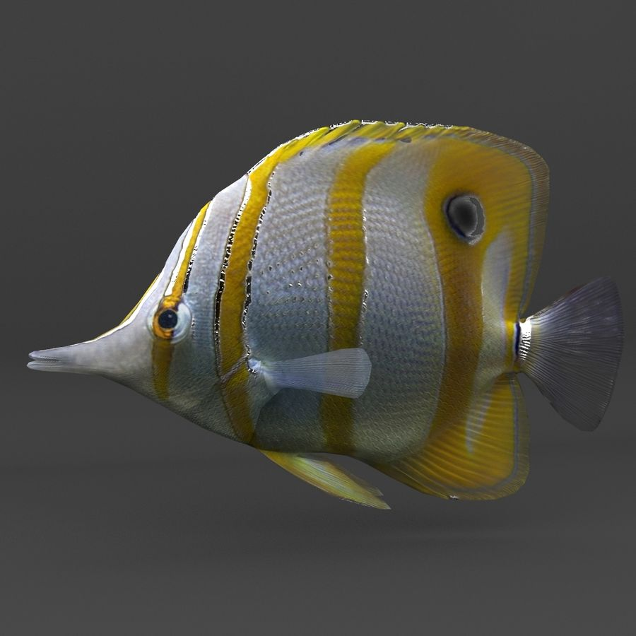coral reef and fishes royalty-free 3d model - Preview no. 54