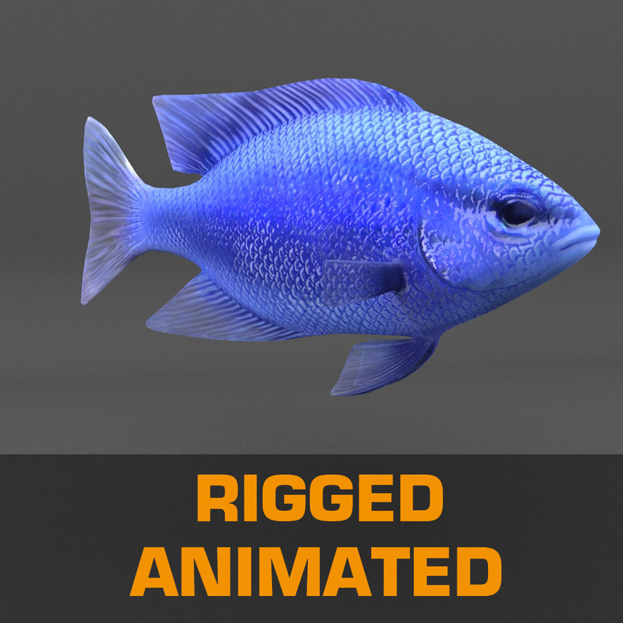 coral reef and fishes royalty-free 3d model - Preview no. 91