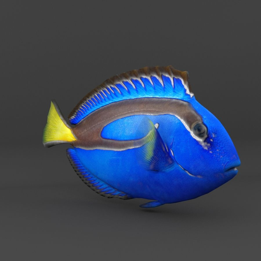 coral reef and fishes royalty-free 3d model - Preview no. 8