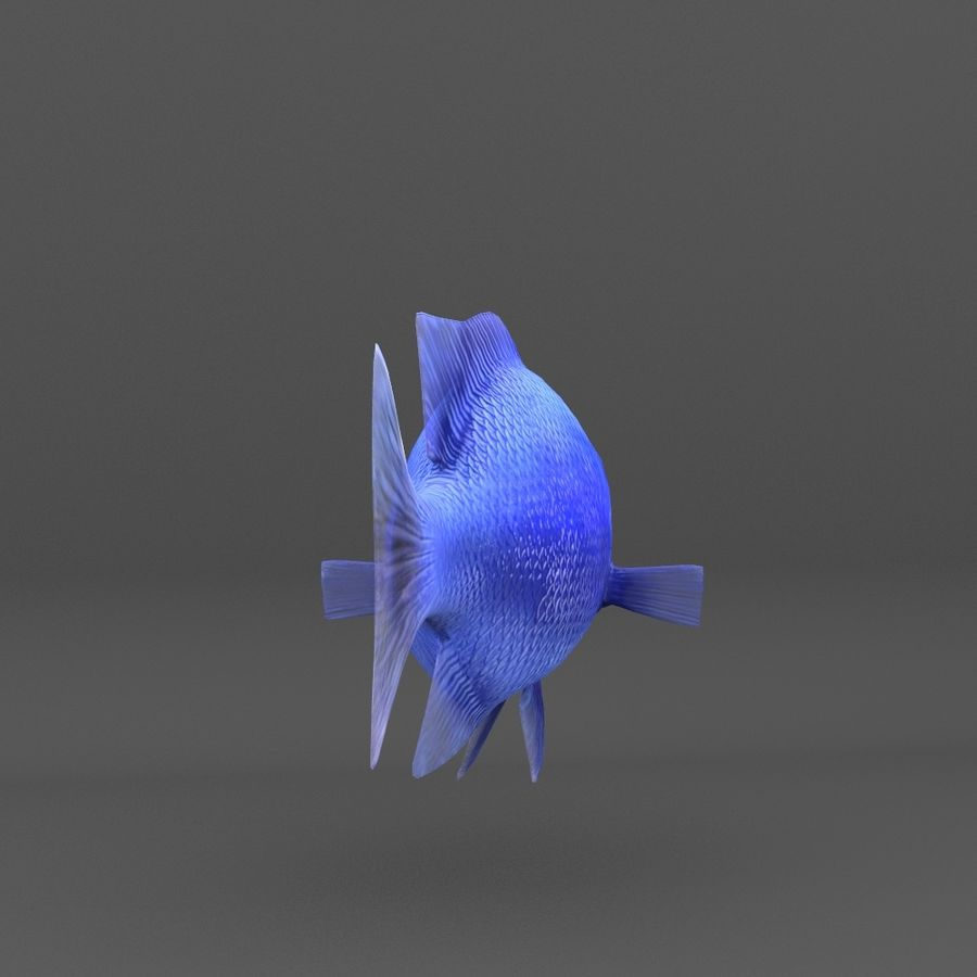 coral reef and fishes royalty-free 3d model - Preview no. 73