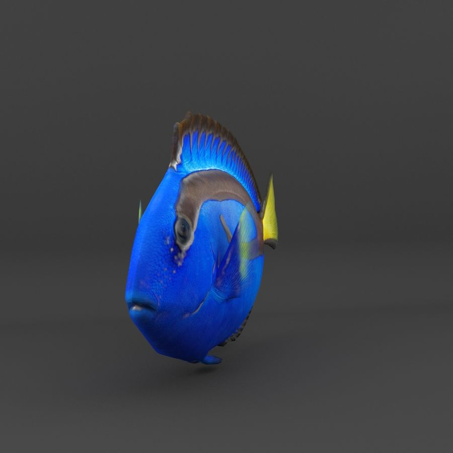 coral reef and fishes royalty-free 3d model - Preview no. 24