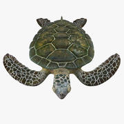 Green Sea Turtle Rigged 3d model