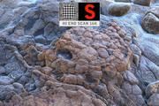 Arrecife de coral molido 16K Ultra HD modelo 3d