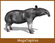 MegaTapirus 3d model