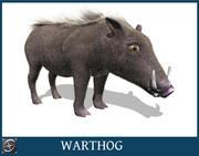 疣猪 3d model
