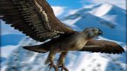 Adler 3d model