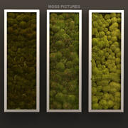 Moss pictures 3d model