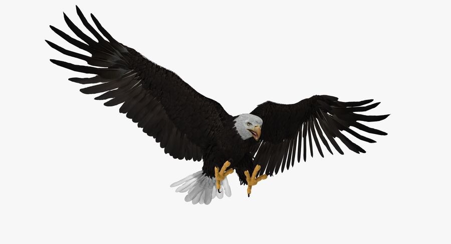 Bald Eagle Rigged royalty-free 3d model - Preview no. 6