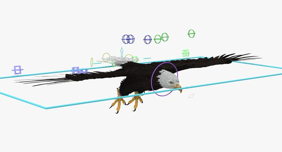 Bald Eagle Rigged royalty-free 3d model - Preview no. 5