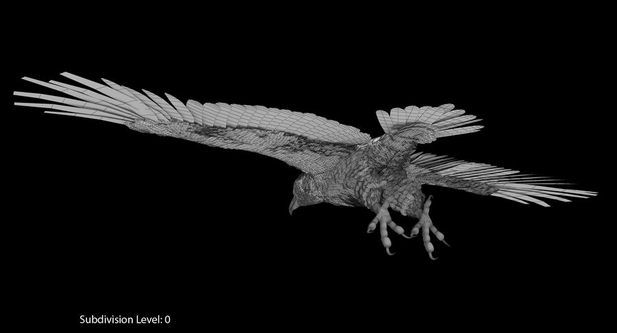Bald Eagle Rigged royalty-free 3d model - Preview no. 21