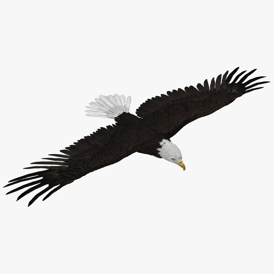 Bald Eagle Rigged royalty-free 3d model - Preview no. 1