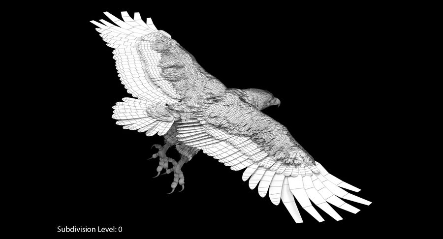 Bald Eagle Rigged royalty-free 3d model - Preview no. 19