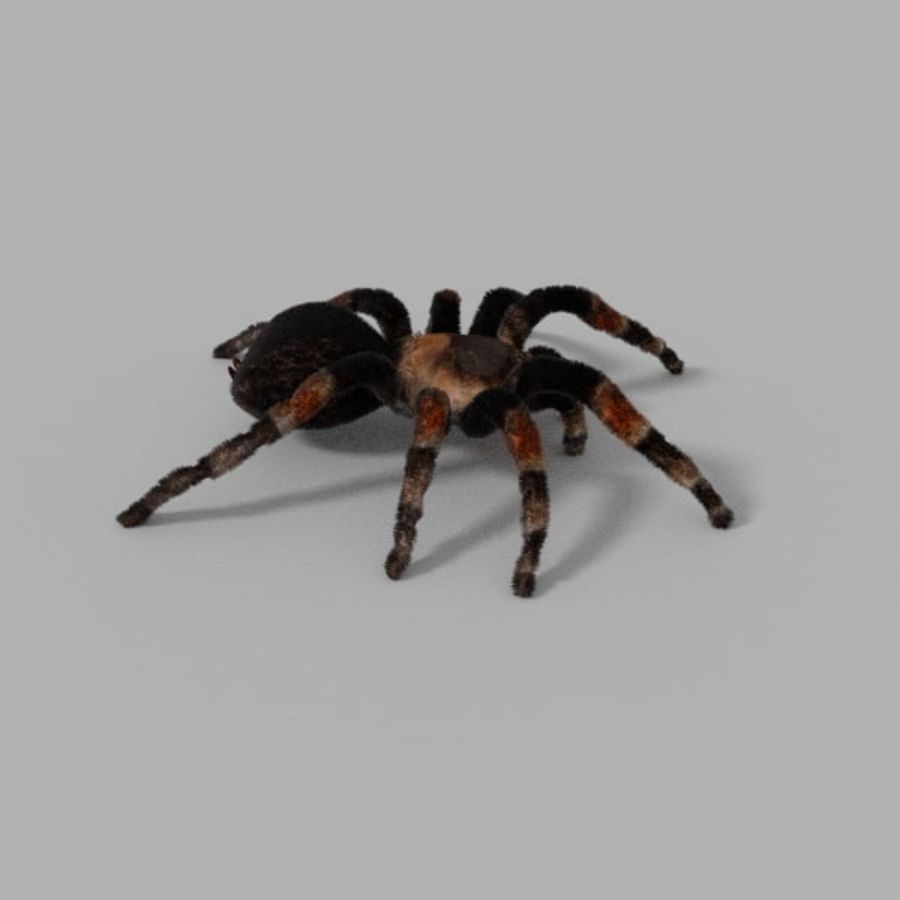 Tarantula royalty-free 3d model - Preview no. 3
