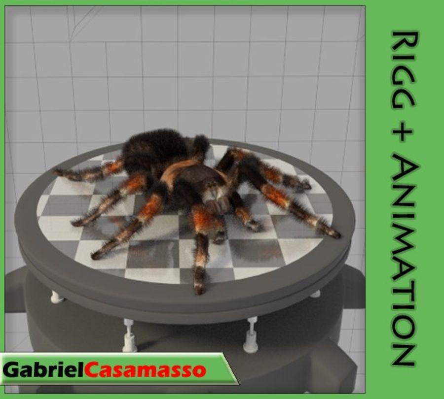 Tarantula royalty-free 3d model - Preview no. 1