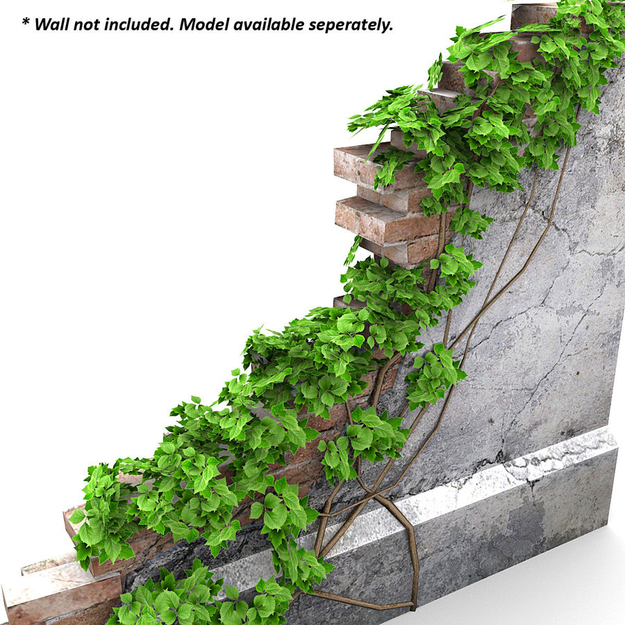 Ivy Vine 1 royalty-free 3d model - Preview no. 4