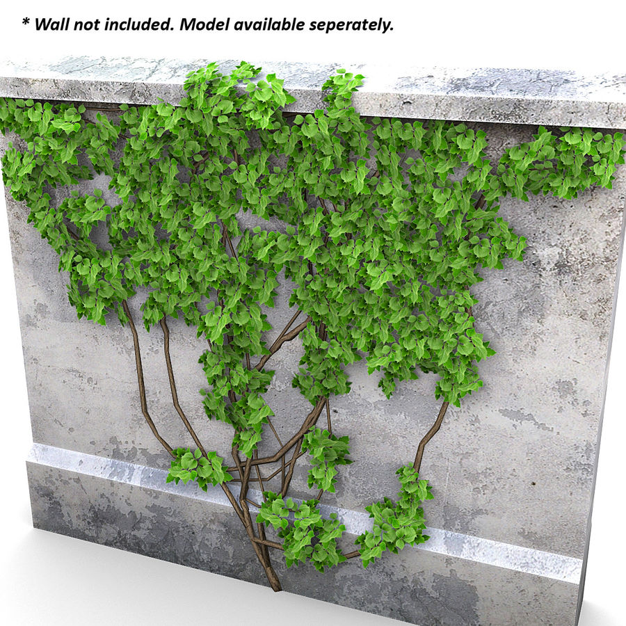 Ivy Vine 1 royalty-free 3d model - Preview no. 6
