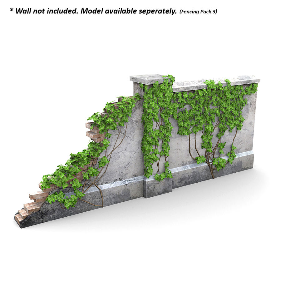Ivy Vine 1 royalty-free 3d model - Preview no. 3