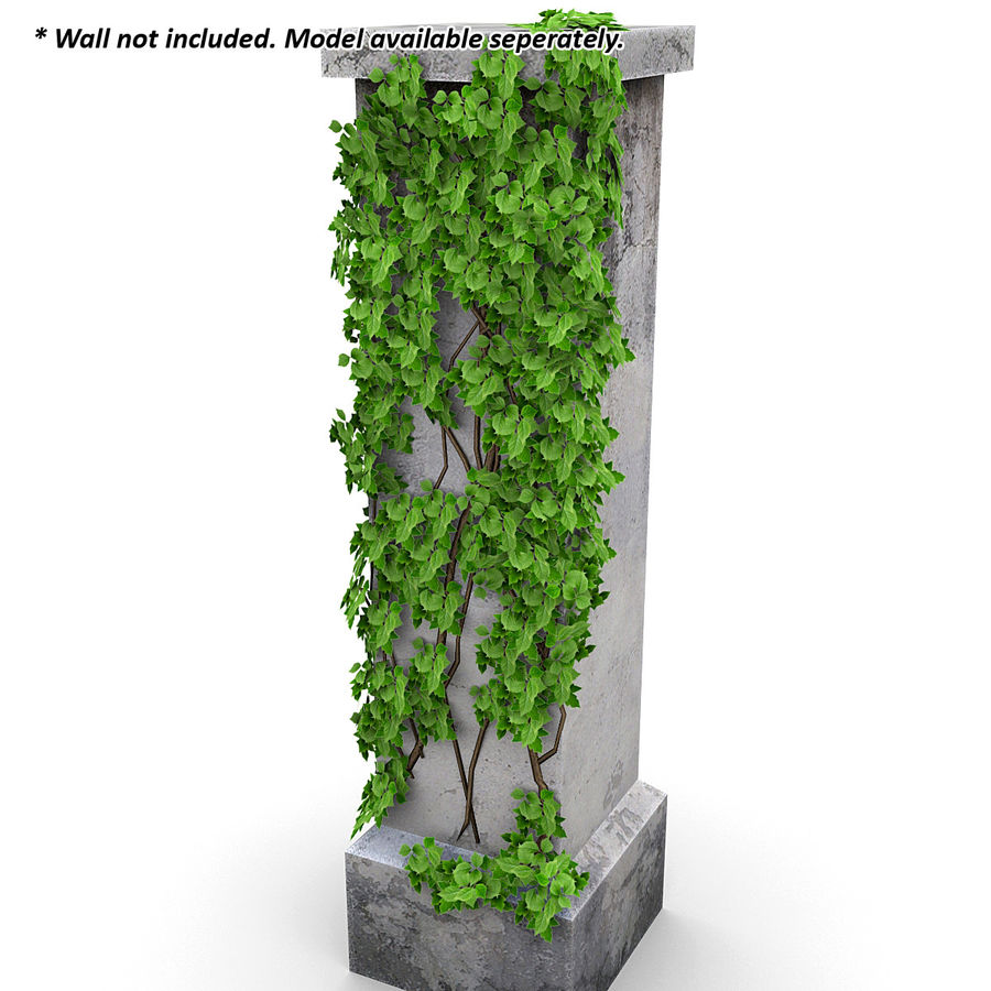 Ivy Vine 1 royalty-free 3d model - Preview no. 5