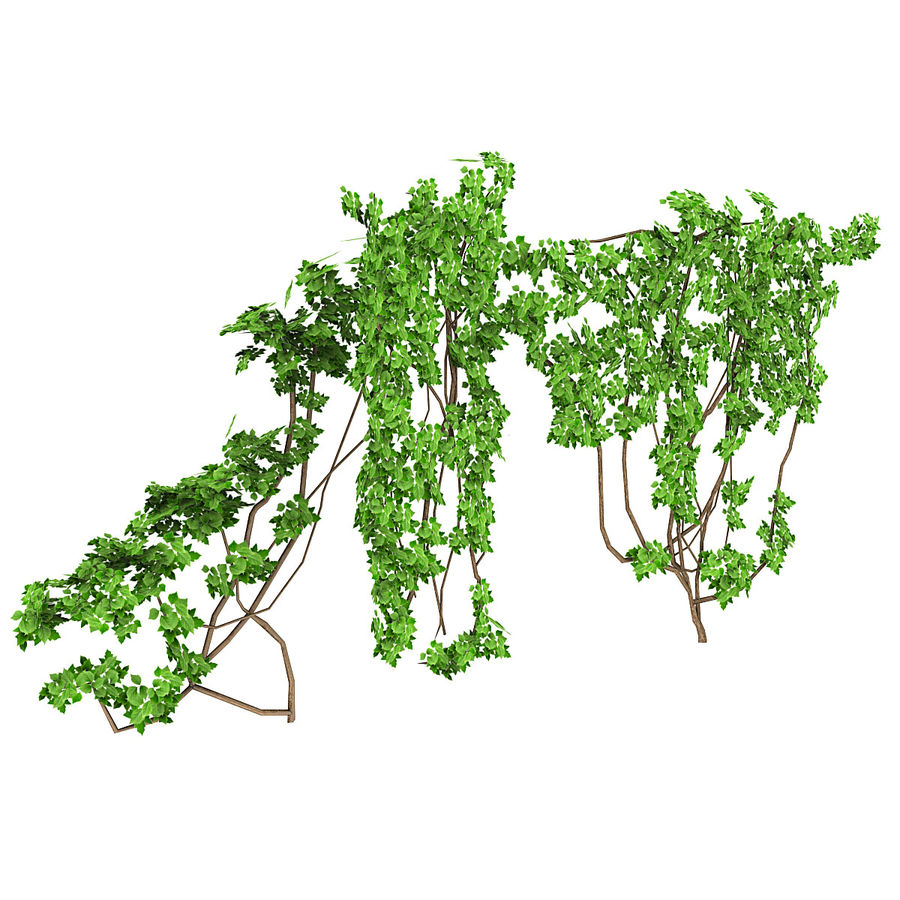 Ivy Vine 1 royalty-free 3d model - Preview no. 1