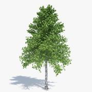 Árvore de vidoeiro 3d model