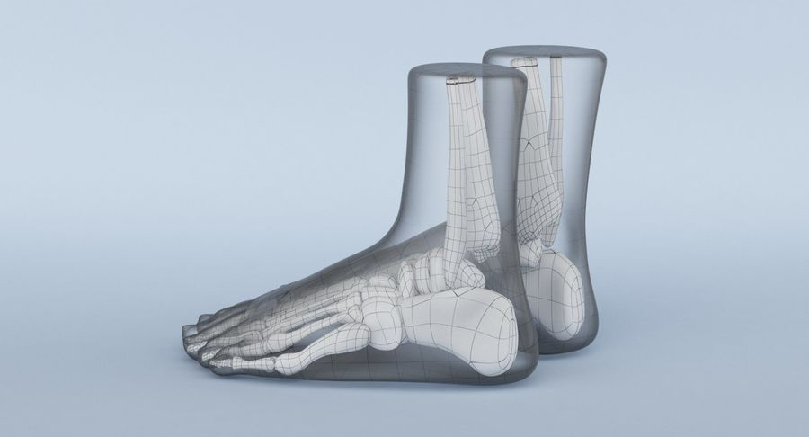 Foot Anatomy Blue royalty-free 3d model - Preview no. 22