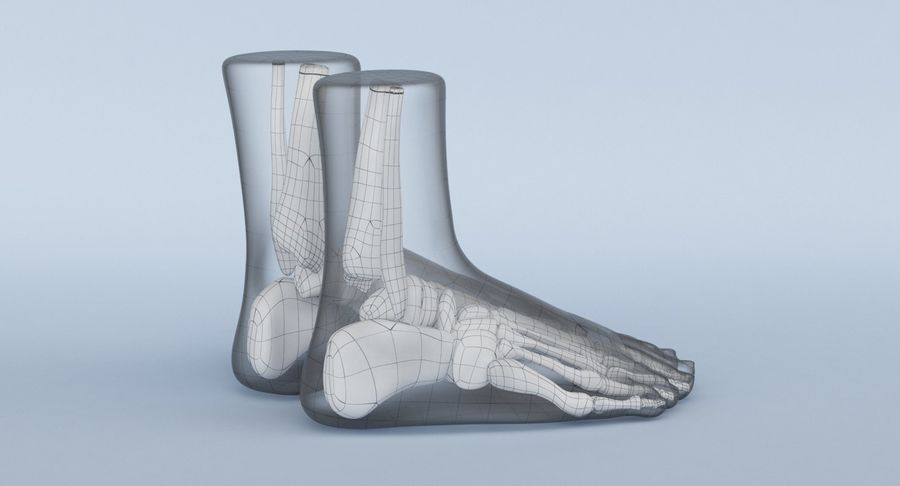 Foot Anatomy Blue royalty-free 3d model - Preview no. 18