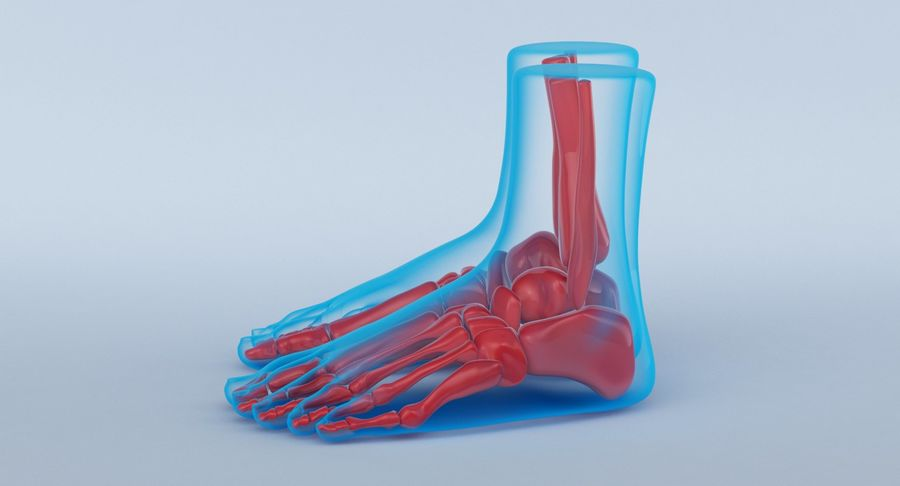 Foot Anatomy Blue royalty-free 3d model - Preview no. 11