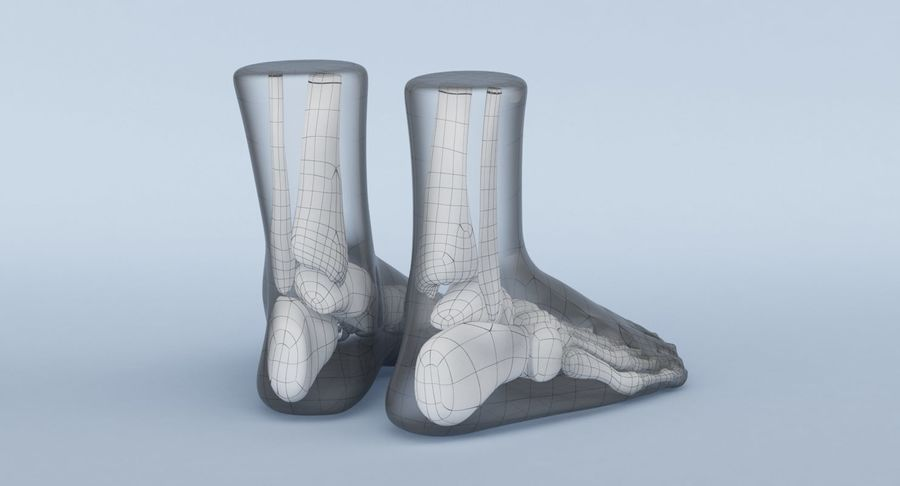Foot Anatomy Blue royalty-free 3d model - Preview no. 19
