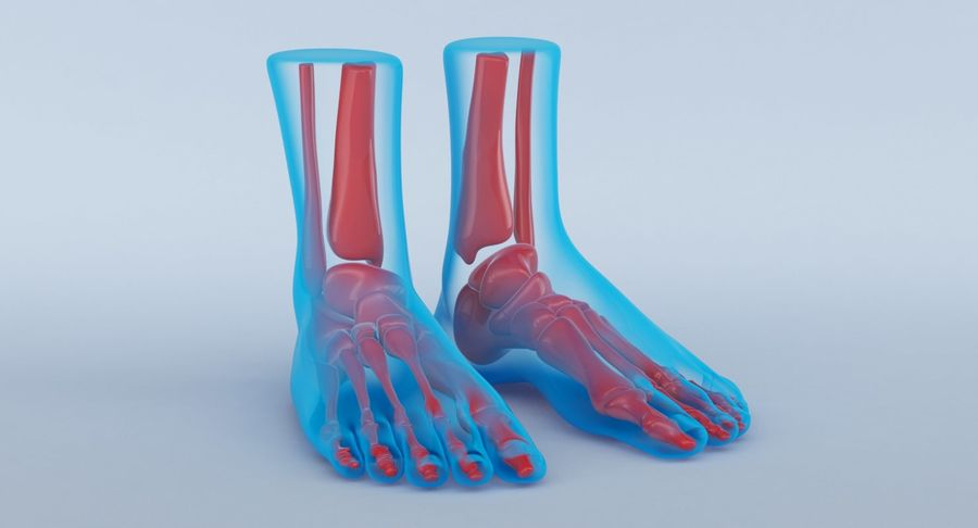 Foot Anatomy Blue royalty-free 3d model - Preview no. 3