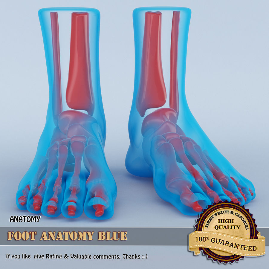 Foot Anatomy Blue royalty-free 3d model - Preview no. 1