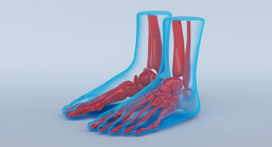 Foot Anatomy Blue royalty-free 3d model - Preview no. 12