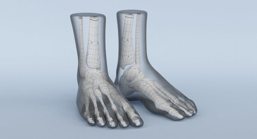 Foot Anatomy Blue royalty-free 3d model - Preview no. 15