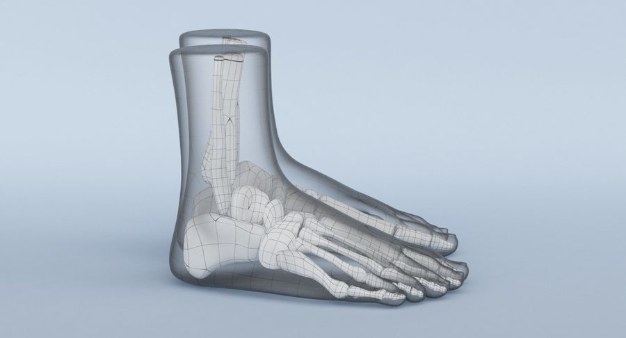 Foot Anatomy Blue royalty-free 3d model - Preview no. 17