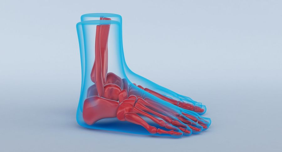 Foot Anatomy Blue royalty-free 3d model - Preview no. 5