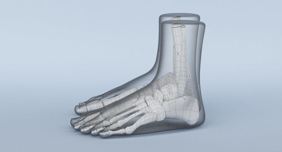 Foot Anatomy Blue royalty-free 3d model - Preview no. 23