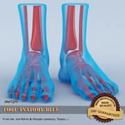 Foot Anatomy Blue 3d model