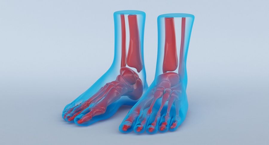 Foot Anatomy Blue royalty-free 3d model - Preview no. 13